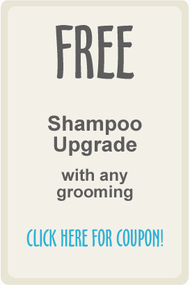 Coupon_Shampoo