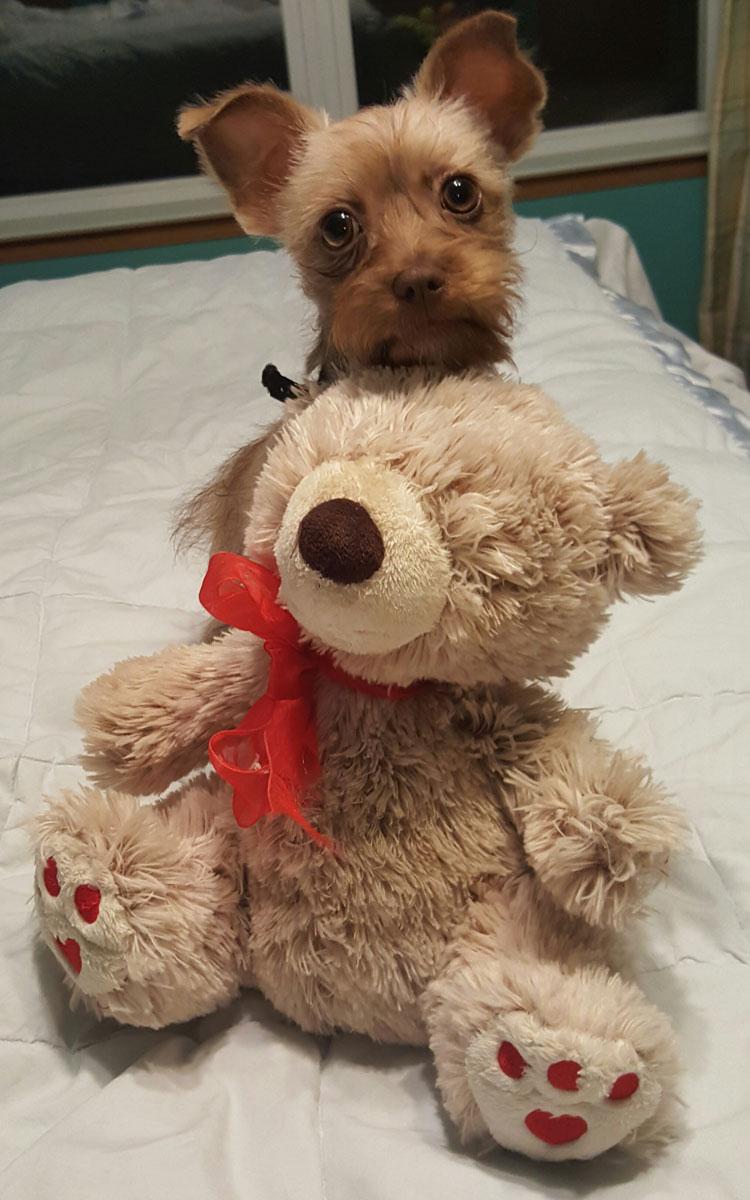 Pup & Teddy